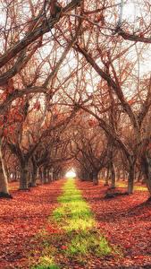Обои Осенние Дерево Листва HDRI Природа