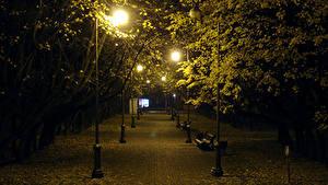Обои Белоруссия Парк Осень Дерево Ночью Уличные фонари Скамейка Лист Minsk Природа