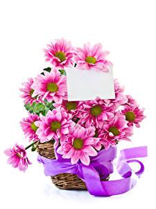 Фотографии Хризантемы Белый фон Шаблон поздравительной открытки Корзинка Ленточка Розовый Цветы