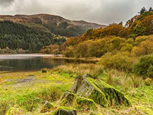 Фотографии Леса Озеро Осень Камни Холм Мох Кустов Loch Chon Природа