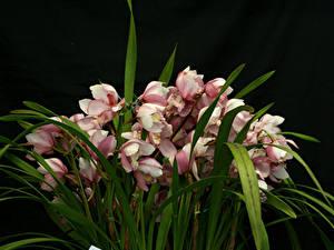 Фотографии Орхидеи Много На черном фоне Цветы