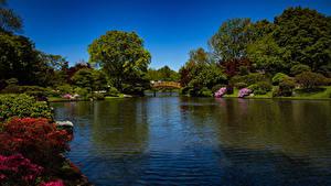 Фотография США Парк Речка Мосты Кусты Деревьев Missouri Botanical Garden Природа
