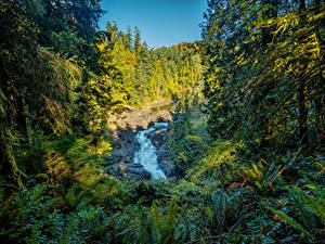 Фото Канада Парки Леса Водопады Трава Деревья Vancouver Island Parks Природа