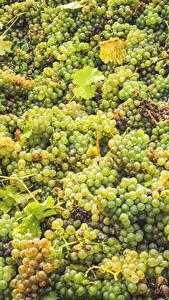 Обои Виноград Много