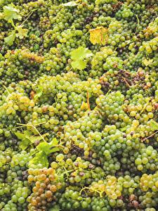 Обои Виноград Много Пища