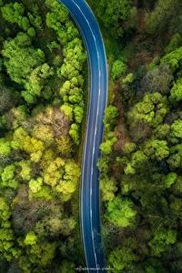 Обои Леса Дороги Сверху Деревья Природа