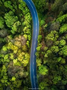 Обои Леса Дороги Сверху Деревья