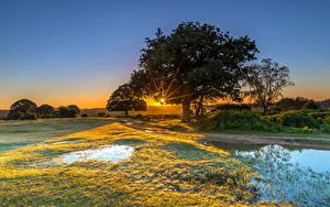 Фотография Англия Рассветы и закаты Парки Вода Дерева Трава New Forest Water Park