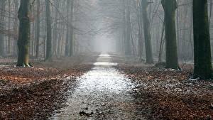 Фотографии Леса Осень Дороги Деревья Листья Туман