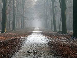 Фотографии Леса Осень Дороги Деревья Листья Туман Природа