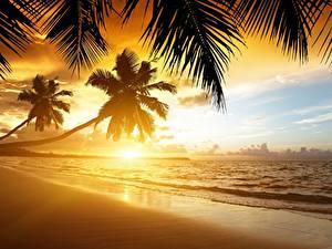 Фотография Рассветы и закаты Море Побережье Тропики Пальмы Пляж