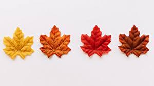 Фото Листва Клён Серый фон Желтый Красный Оранжевый Коричневый