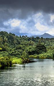 Фотографии Тропики Река Леса Облачно Samoa