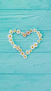 Обои для рабочего стола День всех влюблённых Ромашка Сердечко Шаблон поздравительной открытки Доски