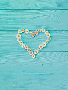 Картинки День всех влюблённых Ромашка Сердечко Шаблон поздравительной открытки Доски
