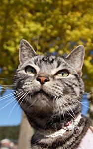 Фотография Кошка Усы Вибриссы Взгляд