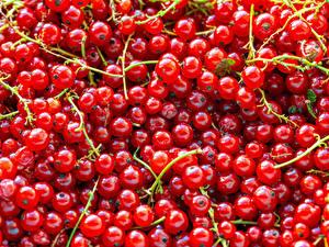 Фото Текстура Смородина Красный Еда