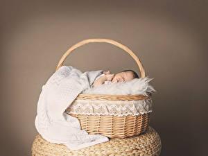Обои Корзина Грудной ребёнок Спят