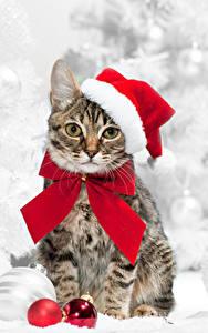 Картинки Новый год Кошка Шапки Шарики Взгляд Бант