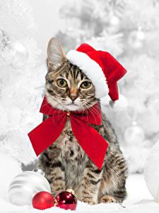 Картинки Новый год Кошка Шапки Шарики Взгляд Бант Животные