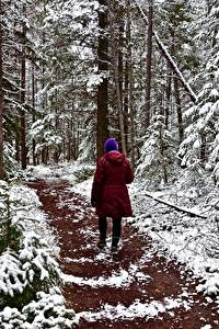 Фото Леса Зимние Тропинка Гуляет Снег Природа