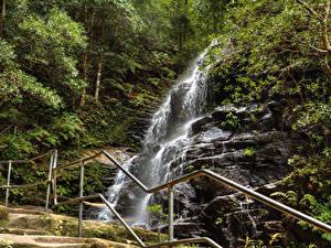 Фотографии Австралия Парки Водопады Леса Сидней Утес Ограда Sylvia falls Blue Mountains Природа