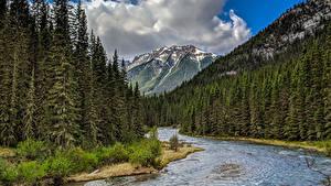 Фотографии Канада Парки Лес Речка Горы Пейзаж Банф Ель Природа