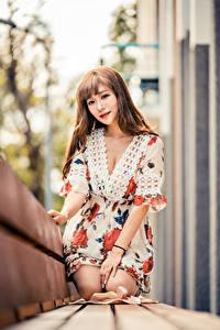 Картинка Азиатки Боке Скамья Сидящие Платья Шатенки девушка