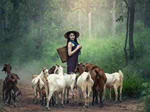 Фотография Азиаты Коза козел Тропа Шляпа Трава Брюнетка Животные Девушки
