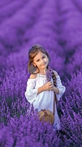 Картинки Поля Лаванда Девочка Взгляд Косички Дети
