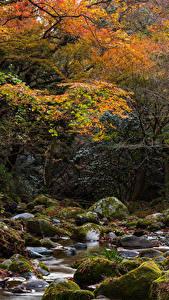Обои Япония Осень Парк Камень Ручеек Дерева Мох Hananukikeikoku Valley Природа
