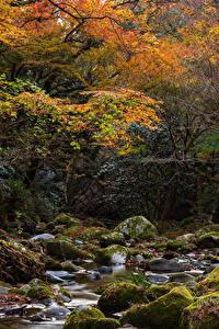 Обои Япония Осень Парк Камень Ручеек Дерева Мох Hananukikeikoku Valley