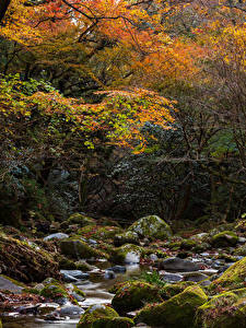 Обои Япония Осень Парки Камень Ручей Деревья Мох Hananukikeikoku Valley Природа