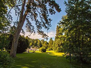 Картинка Швейцария Парки Газоне Деревьев Кусты Kannenfeldpark Природа