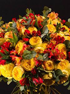 Фото Букет Альстрёмерия Пион Черный фон цветок