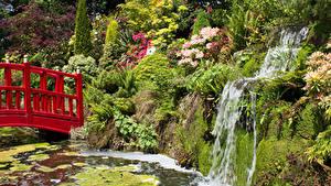 Картинка Англия Сады Пруд Водопады Мост Скала Кустов Mount Pleasant Gardens Chester