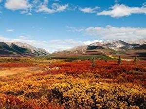 Картинка Горы Осень Парк Штаты Аляска Denali National Park