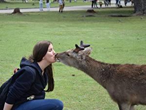 Обои Олени 2 Трава Поцелуй Брюнетка Рога Животные Девушки