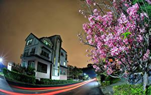 Картинка Тайвань Здания Дороги Цветущие деревья Ночные Улица Города