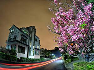 Картинка Тайвань Дома Дороги Цветущие деревья В ночи Улиц город