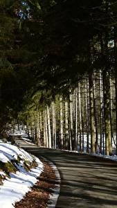 Картинки Зимние Леса Дороги Снега Дерева Ель Природа