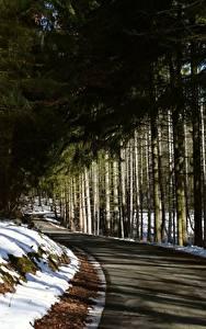 Картинки Зимние Леса Дороги Снег Деревья Ель Природа