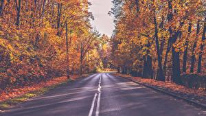 Картинки Осенние Дороги Леса Деревья