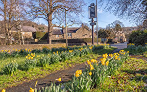 Картинки Великобритания Здания Весенние Нарциссы Улица Baslow Derbyshire