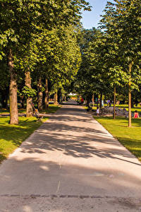 Фотография Швейцария Парки Деревья Аллея Kannenfeldpark Природа
