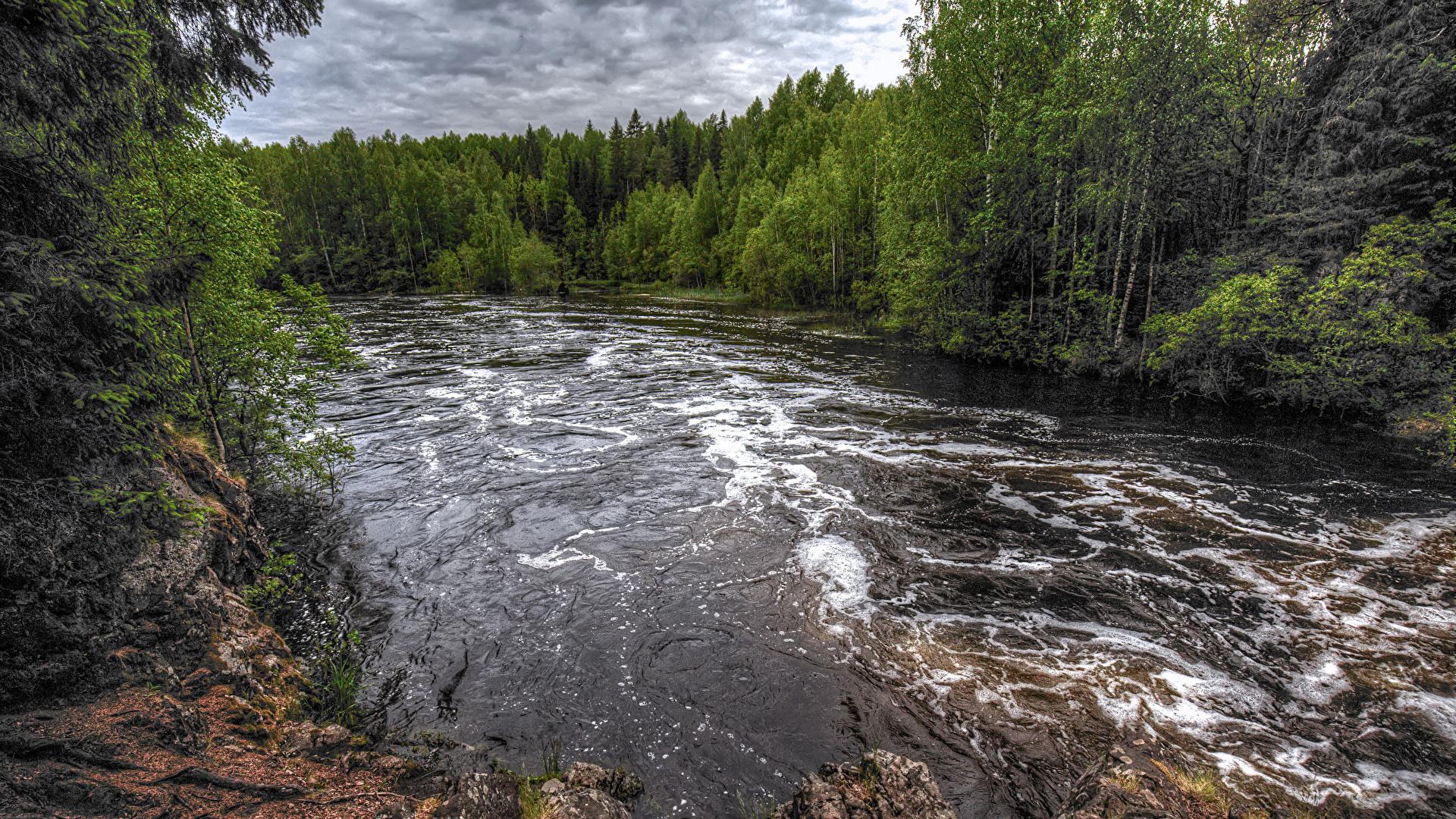 Картинки Россия Suna River Republic of Karelia Природа лес Реки 1920x1080 Леса река речка