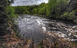Картинки Россия Речка Лес Suna River Republic of Karelia Природа