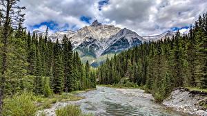 Картинки Канада Парки Гора Лес Речка Камни Банф Ели Природа