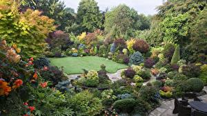 Фотография Англия Сады Кусты Газоне Дизайн Walsall Garden Природа