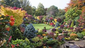 Картинки Англия Сады Кусты Ель Walsall Garden Природа